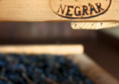 Appassimento Amarone - Venetian Vine